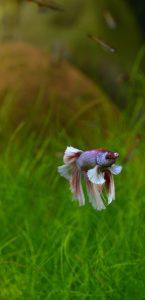 betta aquarium services