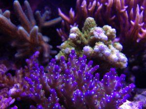 live coral aquarium aquarium services