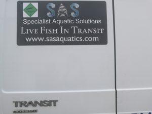 Moving live fish