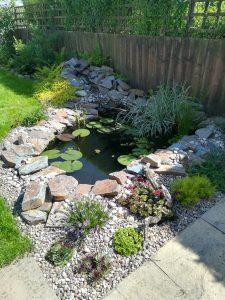 wildlife pond builder