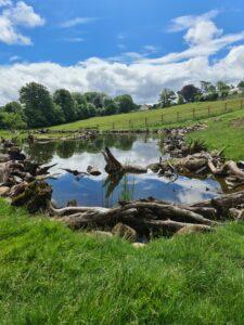 massive garden swimming pond pool